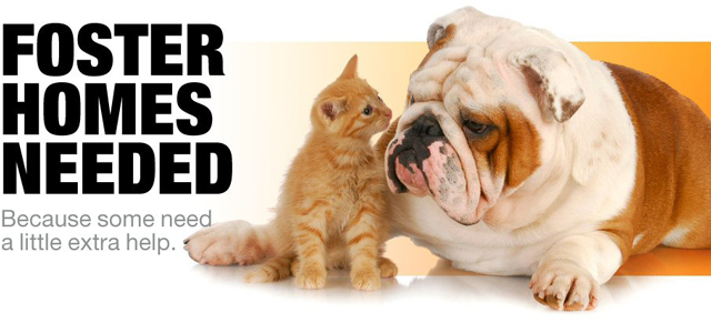 bnr-foster-homes-pets640X291 (1)