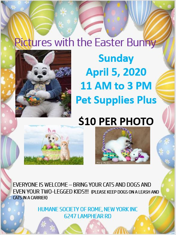 Canceled - Pictures with the Easter Bunny @ Pet Supplies Plus